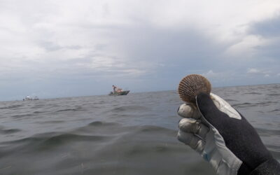 Why Scalloping in Crystal River is the Perfect Family Getaway